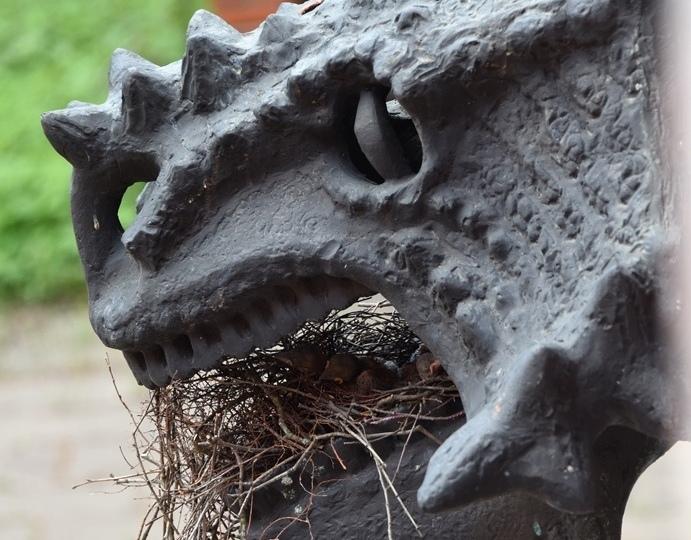 Сойка свила гнездо в пасти парейазавра