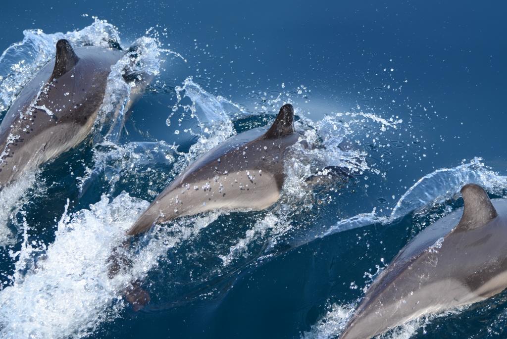 Ученые института океанологии провели авиаучет черноморских дельфинов